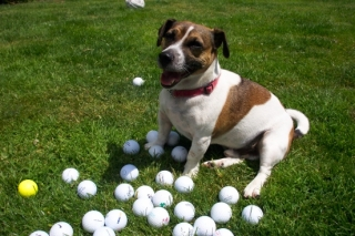 'Lost' Golf Balls Pay Up!
